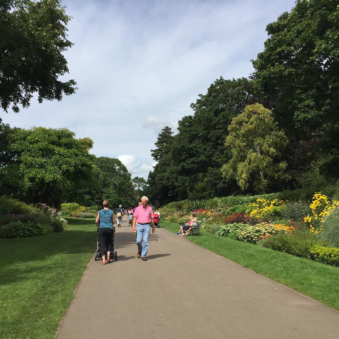 butepark you are looking beautiful today! parklife flowers sun