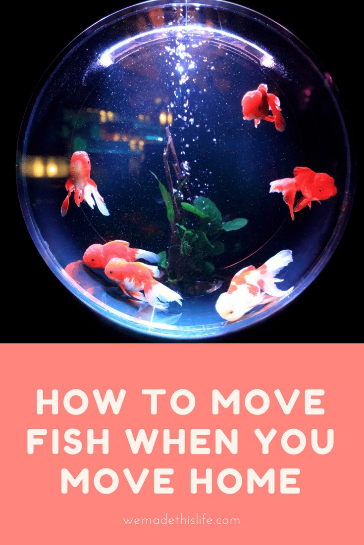 HOW TO MOVE FISH WHEN YOU MOVE HOME (1)